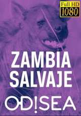 zambia salvaje odisea capitulos 1 al 7 torrent descargar o ver serie online 1