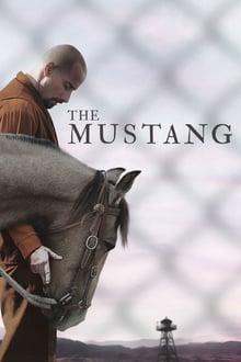 the mustang torrent descargar o ver pelicula online 1